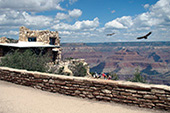 Grand Canyon Safari Rim and Walk Tour